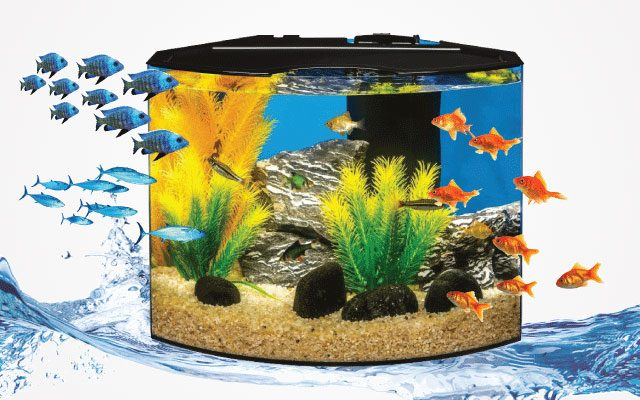 Best 5-Gallon Fish Tanks in 2019 for Your Little Fishy Friends