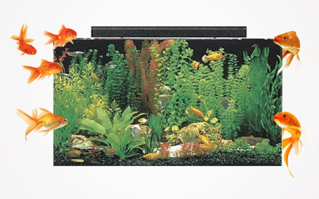 Best 50-Gallon Fish Tanks in 2019