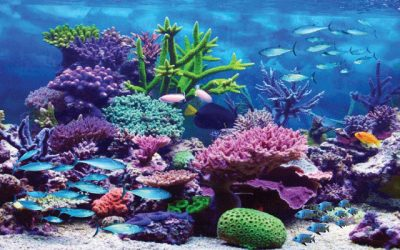 Best Aquarium Backgrounds for Your Tanks