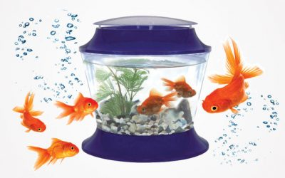 7 Best Goldfish Bowls in 2019