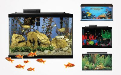 Best Large Fish Tanks for Your Big Fishy Friends