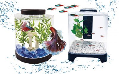 Top 11 Best Quality Betta Fish Tanks in 2019