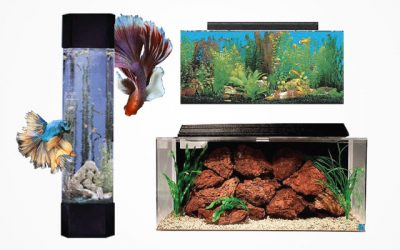 Top 7 Best Quality of 30 Gallon Fish Tank in 2019