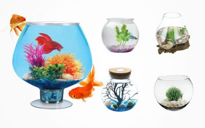 10 Best Glass Fish Bowls for Beginners in 2019