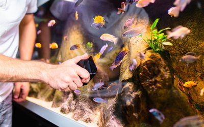 Aquarium Maintenance Tips And Fish Care Guidelines