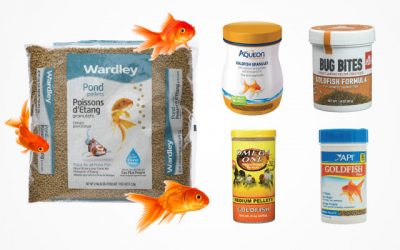 All About the Best Goldfish Food and Guideline Info [ Updated 2019 ]