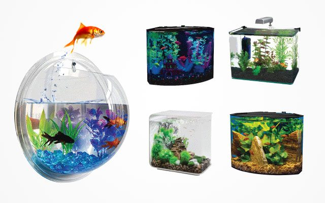 Best Acrylic Fish Tanks – Top Recommendation of Fish Hobbyists