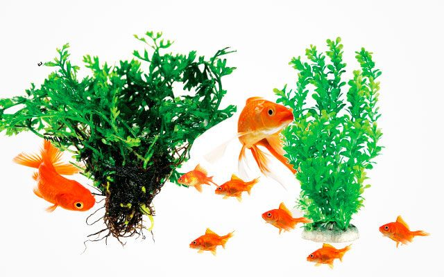 10 Best Fish Tank Plants for Beginners [ 2019 Updated ]