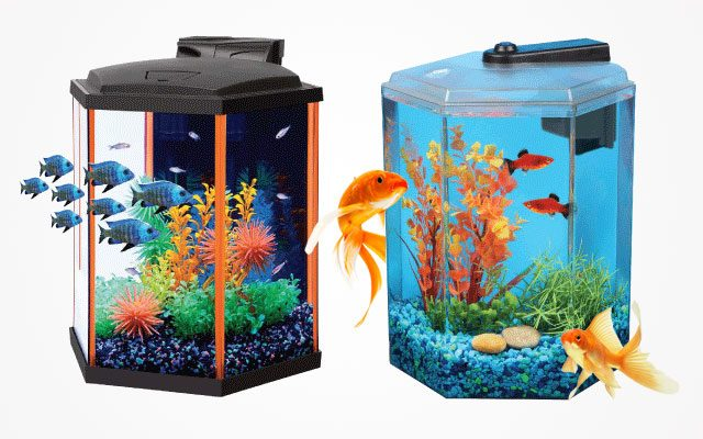10 Best Hexagon Fish Tanks You May Want to Try