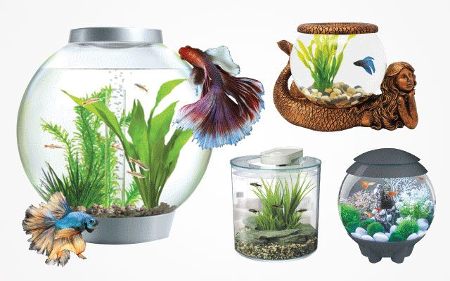 10 Best Round Fish Tanks in 2019