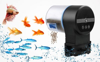 Best Automatic Fish Feeders Make the Aquatic Life Gorgeous