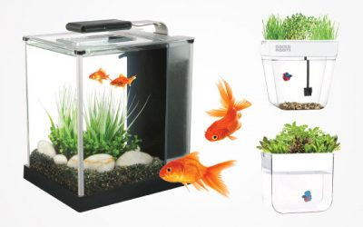 8 Best Self-Cleaning Fish Tanks in 2019