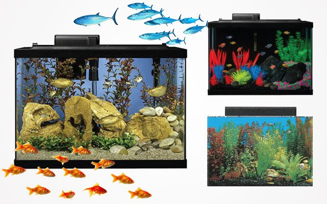 Best 20-Gallon Fish Tanks in 2019