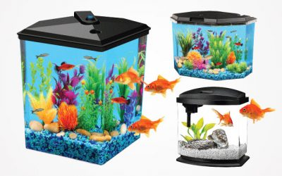 Best Small Fish Tanks in 2019