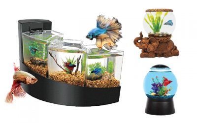 8 Coolest Fish Tanks in 2019