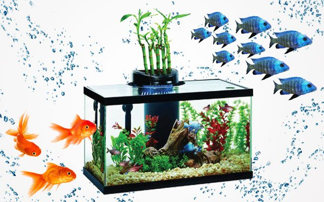 Top 10-gallon Fish Tank for Beginners
